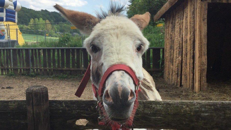 Familienpark-Westerheim-Zoo-Pony